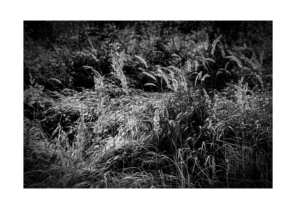 Sidelit grass straws